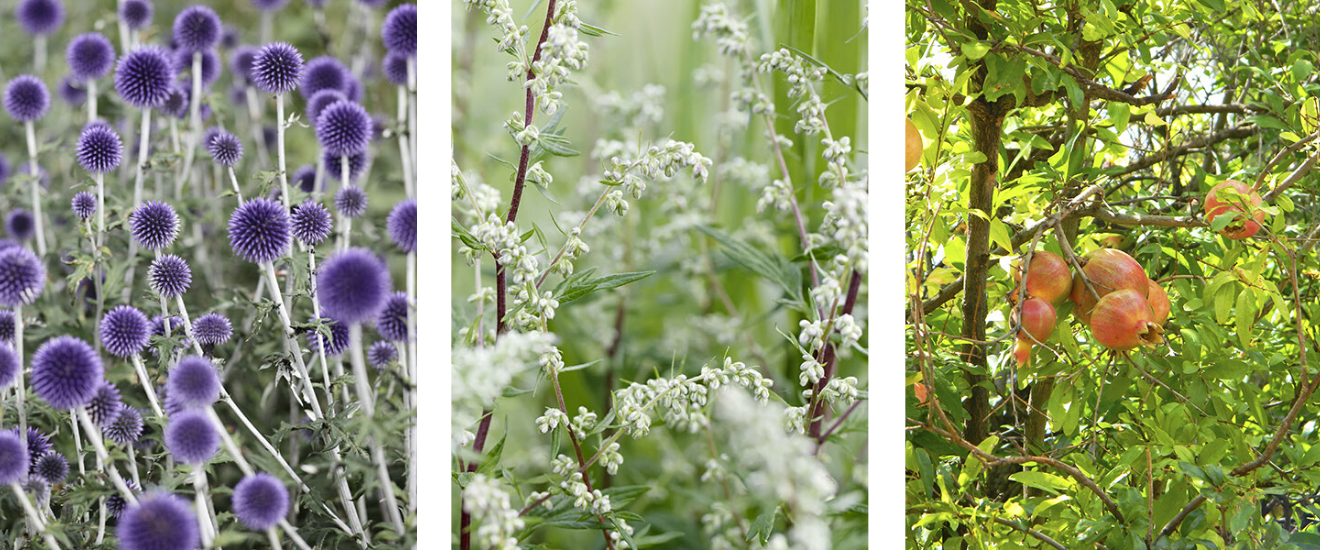 choisir ses plantes en fonction de l'orientation du terrain