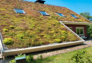 une toiture végétale inclinée